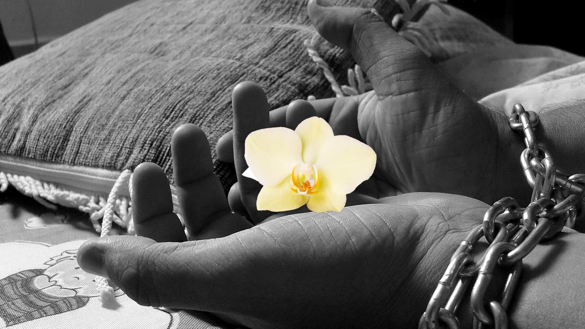 Hænder med vanilje